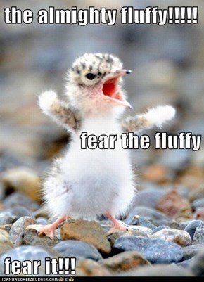 the almighty fluffy!!!!! fear the fluffy fear it!!!