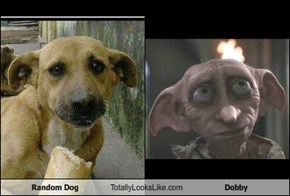 Random Dog Totally Looks Like Dobby