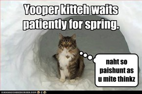 Yooper kitteh waits patiently for spring.