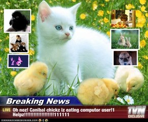 Breaking News - Oh noz! Canibal chickz iz eating computor user!1 Helpz!!!!!!!!!!!!!!!!!!!111111