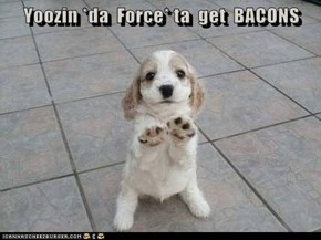 U Can Haz Bacon