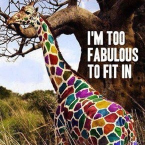 Now That's a Giraffe of a Different Color!