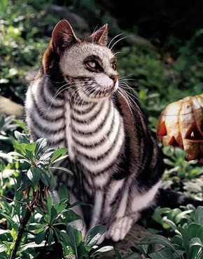 Tim Burton's Cat