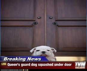Breaking News - Queen's guard dog squashed under door