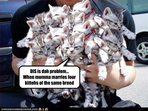 DIS is dah problem... When momma marries four kittehs of the same breed