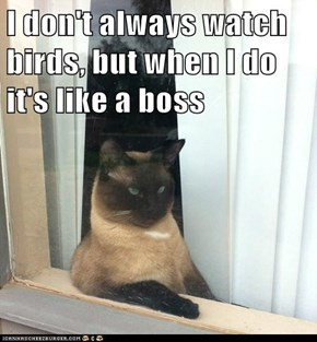 I don't always watch birds, but when I do it's like a boss