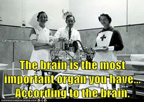 The brain is the most important organ you have...                    According to the brain.
