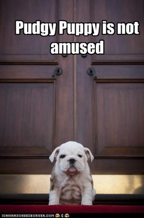 Pudgy Puppy is not amused