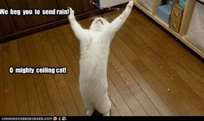 We  beg  you  to  send rain!