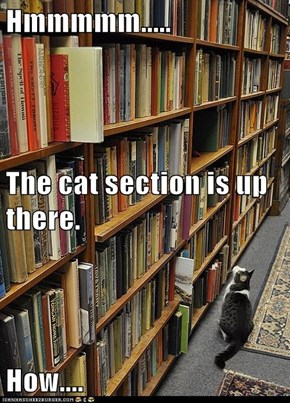 Hmmmmm..... The cat section is up there. How....