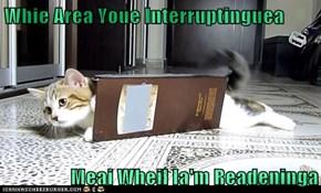 Whie Area Youe Interruptinguea  Meai Wheil Ia'm Readeninga