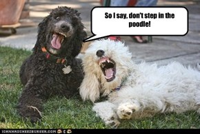 So I say, don't step in the poodle!
