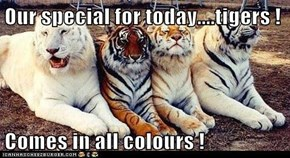 Our special for today....tigers !  Comes in all colours !