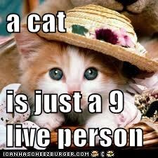 a cat  is just a 9 live person