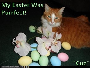 "My Easter Was                     Purrfect!  ""Cuz"""