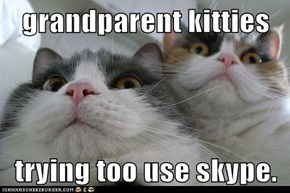 grandparent kitties   trying too use skype.
