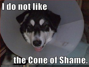 I do not like  the Cone of Shame.