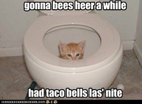 gonna bees heer a while       had taco bells las' nite