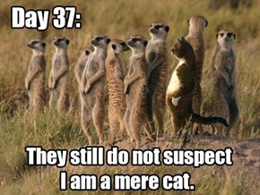 Let's Just Hope No One Calls Meowt!