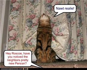 Hey Roscoe, have you noticed the neighbors pretty new Persian?