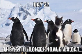 DAY 37  THEY STILL DON'T KNOW I'M A CAT