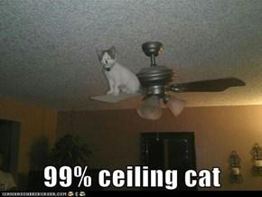 99% ceiling cat