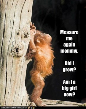 Measure me again mommy.    Did I grow?    Am I a big girl now?