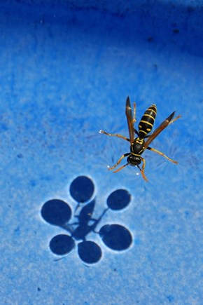 Surface Tension Is Weird