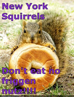 New York Squirrels  Don't eat no friggen nutz!!!!