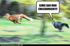 GIMIE BAK MAH CHEEZBURGER!!!!