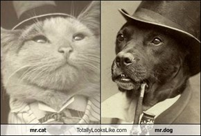 mr.cat Totally Looks Like mr.dog
