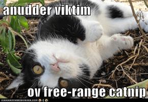 anudder viktim  ov free-range catnip