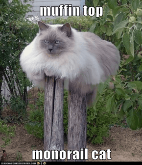 muffin top  monorail cat