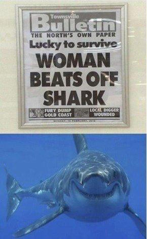 Shark Loved It