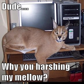 Dude....  Why you harshing my mellow?
