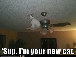 'Sup. I'm your new cat.