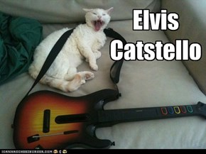 Elvis Catstello