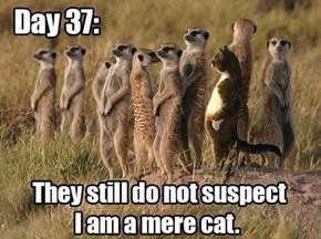 He's no mere cat...