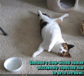 Sheldon's slow-witted human                                                      mistakenly expected him                                                      to go to the bowl.