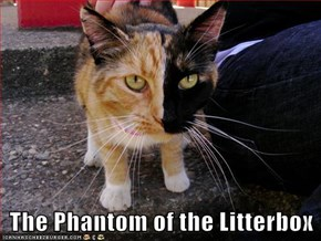 The Phantom of the Litterbox