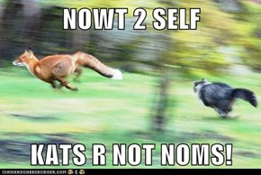 NOWT 2 SELF  KATS R NOT NOMS!