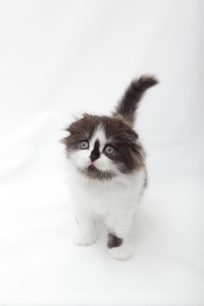 Cyoot Kitteh of teh Day: Is It Me You're Looking For?