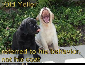 'Old Yeller'  referred to his behavior, not his coat