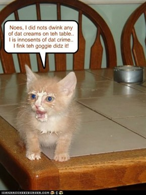 Kittie proclaims innocence!