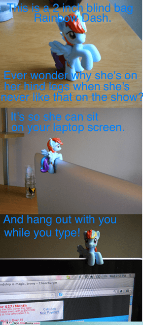 Dashie Likes to Watch