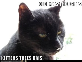 OLD KATS THOUGHTS  KITTEHS THEES DAIS...