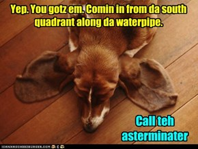 Call the Termite Hound for a free in-home analysis today!