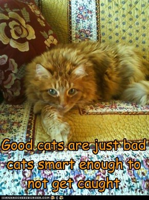 Good cats are just bad cats smart enough to not get caught