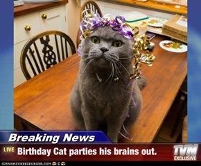 Breaking News - Birthday Cat parties his brains out.