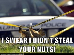I SWEAR I DIDN'T STEAL YOUR NUTS!